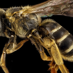Bees Are Now Officially Announced To Be The Most Important Beings On Planet