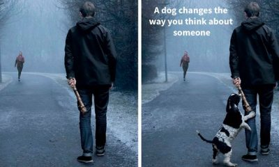 Ad Campaigns Show How A Dog Can Change A Person's Life