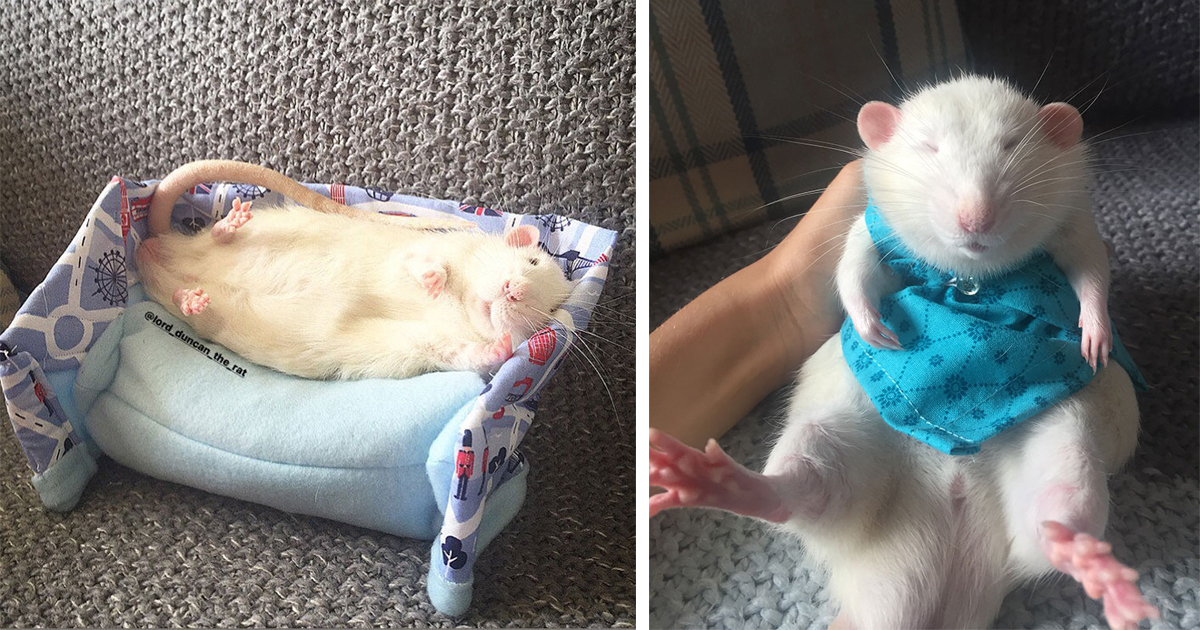 Woman Makes Mattresses And Matching Pajamas For Rats, They Are So Adorable