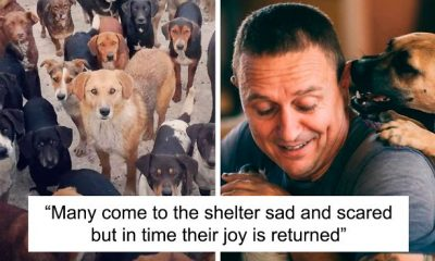 Guy Took In Pups No One Wanted, Runs A Shelter With 750 Dogs