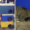Guy Uses Unwanted Coolers To Make Winter Shelters For Stray Cats